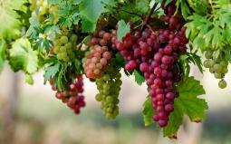 4 Buah dan Sayuran Ampuh Turunkan Kolesterol