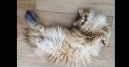Kucing Paham Konsep Fisika untuk Tangkap Mangsa Tak Terlihat