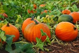 4 Jenis Makanan Yang Cepat Tingkatkan Imunitas Tubuh